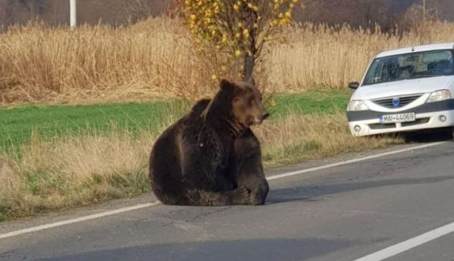 Dosar penal în cazul ursului lăsat să agonizeze 18 ore pe drum - urs-1574014685.jpg