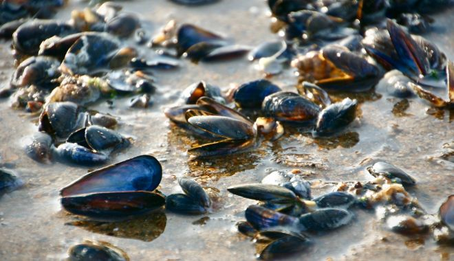Foto: Vă plac midiile? Puteți urma un curs de instruire privind acvacultura midiilor