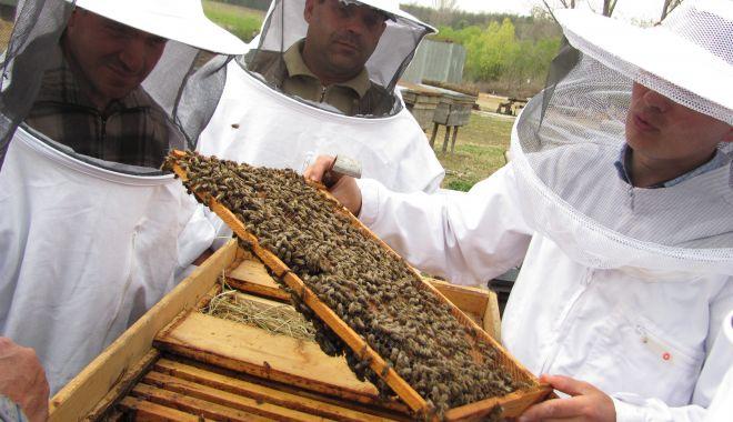 Veste bună pentru apicultori: a fost prelungit termenul de depunere a documentelor justificative! - vestebunaentruapicultori-1596641664.jpg