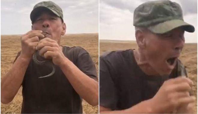 Un bărbat din Rusia a murit după ce și-a băgat o viperă în gură și aceasta l-a mușcat de limbă - vipera-1632501489.jpg