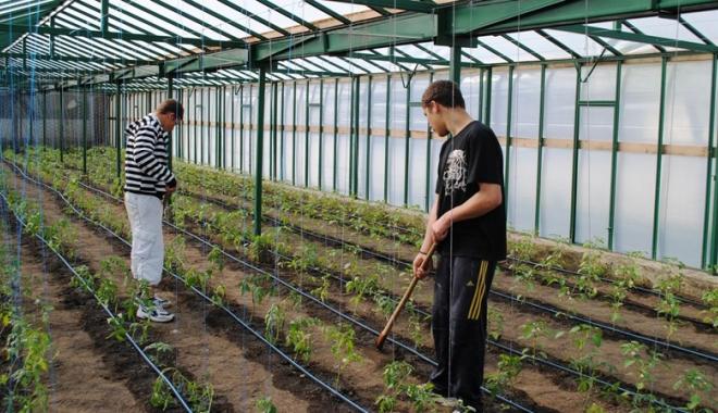 Foto: Minori angajați pe post de zilieri pe câmp