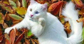 Pisicile ajută la reducerea nivelului de stres