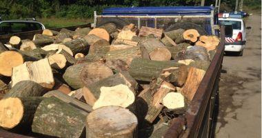 Lege: Hoții de lemne vor rămâne fără mijloacele pe care le folosesc pentru comiterea ilegalităților!