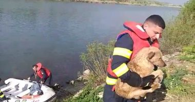 Câine salvat de pompieri din Canalul Dunăre Marea Neagră
