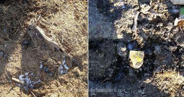 VIDEO / PERCHEZIȚII. Deșeurile ovinelor moarte în Portul Midia nu au fost incinerate, ci îngropate!