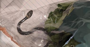 The Guardian: Un cuplu din Australia a găsit un șarpe veninos într-o pungă de salată