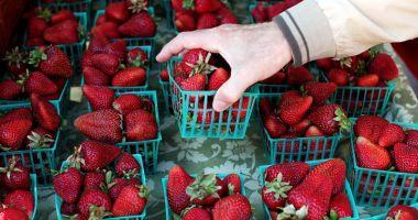 Ace în căpșunile de la supermarket. Scandalul ia amploare