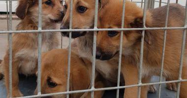 Adopţii rapide, la adăpostul pentru câini fără stăpân, din Constanţa