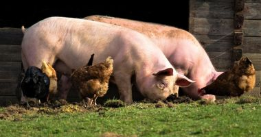 A început plata pentru bunăstarea animalelor