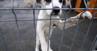 Eutanasierea câinilor ar putea fi decisă de administrația locală, numai după consultarea cetățenilor