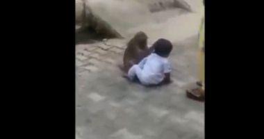 VIDEO INCREDIBIL. O maimuță a răpit un copil de doi ani ca să se joace cu el