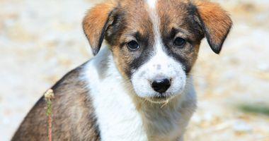 De astăzi nu se mai capturează câinii fără stăpân, la Constanţa