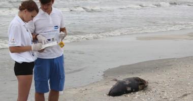 Delfini eșuați, găsiți morți pe plajă