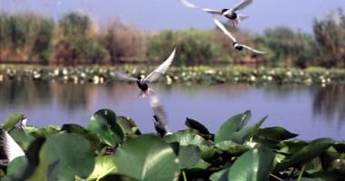 Delta Dunării, cea mai mare creștere a numărului de turiști străini
