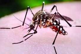 ALERTĂ! Cinci decese din cauza virusului West Nile