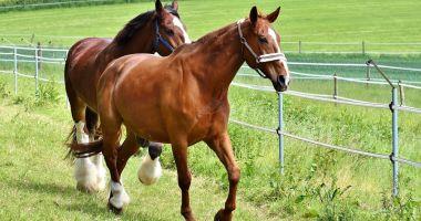 Top 5 rase de cai omologate în România