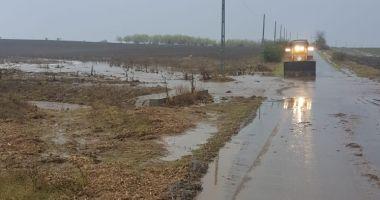 GALERIE FOTO / Inundaţii şi copaci căzuţi pe mai multe drumuri, în Constanţa