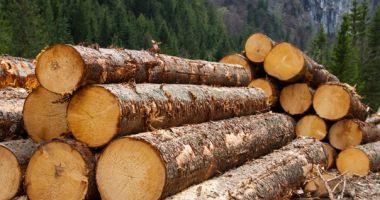 Anul trecut s-a recoltat un volum brut de 18,904 milioane metri cubi de lemn