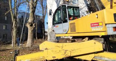 Lucrările de toaletare și corecție a arborilor din Constanța continuă