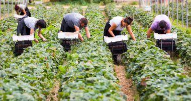 Lucrătorii români vor plăti mai mult pentru a lucra în UK