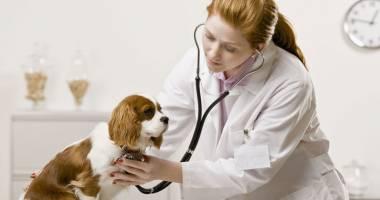 Medicii veterinari din Europa și-au dat întâlnire. Iată unde