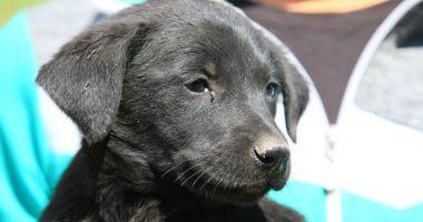 O nouă etapă de sterilizare a câinilor fără stăpân