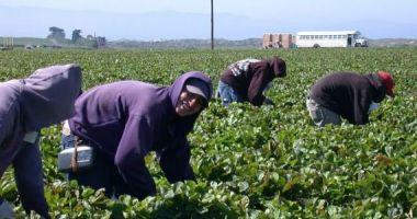 Guvernul a reglementat reducerea timpului de muncă și adordarea indemnizațiilo pentru zilieri și sezonieri