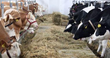 Plata ajutorului de stat pentru ameliorarea raselor de animale