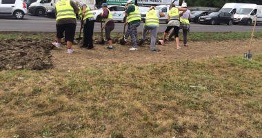 Primăria Constanța, acțiuni de întreținere a spațiilor verzi în mai multe cartiere
