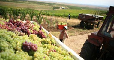 Producţia de vin a României a scăzut