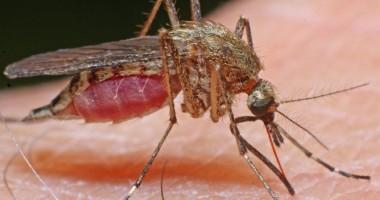 Un virus pentru care nu există vaccin se răspândește în America