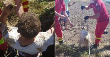 Un bărbat a vrut să își salveze capra dintr-o fântână, dar a uitat să lege funia