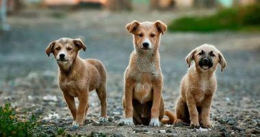Primăria Valu lui Traian nu se implică în adunarea câinilor de pe străzi